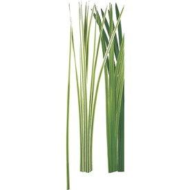 【造花】MAGIQ(東京堂)/ フラックスグラスL 12本 クリームグリーン/FG004338-023【01】【取寄】《 造花(アーティフィシャルフラワー) 造花葉物、フェイクグリーン その他の造花葉物・フェイクグリーン 》