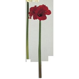 【造花】MAGIQ(東京堂)/エルザアマリリス レッド/FM100179-003【01】【取寄】《 造花(アーティフィシャルフラワー) 造花 花材「あ行」 アマリリス 》