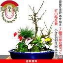 盆栽 梅 200以上の蕾付き 紅白梅盆栽 豪華 松竹梅 寄せ植え 縁起づくしの創作日本庭園 幸福招来 梅 盆栽 黒松 南天 菊…