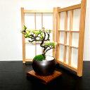 盆栽 父の日 長寿梅 白花 極上ランク 曲付け幹 樹形美長寿梅 福寿 ミニ盆栽 3,5号鉢 極上樹の本格長寿梅 縁起物として…