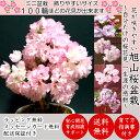 Hb0083-su-01-c