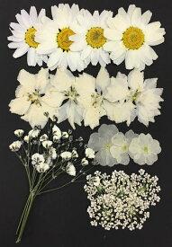 【ネコポス便で送料無料!】【お花屋さんの押し花セット ホワイト&アイボリーMix】