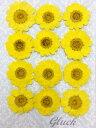 【ネコポス便でお届け・代引き不可】コンパクト 押し花 ムルチコーレ12枚 少量パックにしてお届け! UVレジン 押し花…