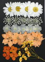 【ネコポス便で送料無料!】【押し花セット ホワイト&オレンジMix】使いやすいホワイトとオレンジの押し花セットです!