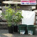 ◆送料無料◆ ブルーベリー 苗木 【2品種選べる 簡単! 丈夫に育てる ブルーベリー 栽培セット】 2年生挿し木苗×2品…