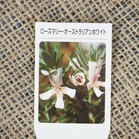 ローズマリー 苗 【オーストラリアンホワイト】 3号ポット苗 ハーブ 苗 庭植え