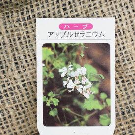 ゼラニウム 苗 【アップル ゼラニウム】 3号ポット苗 ハーブ 苗 品種 ドライフラワー ポプリ 庭植え