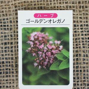 ハーブ 苗 【オレガノ ゴールデン】 3号ポット苗 ハーブティー 料理 庭植え