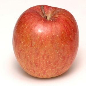 リンゴ 【陸奥(むつ)】 1年生 接木 ポット苗 林檎 苗 果樹 果樹苗
