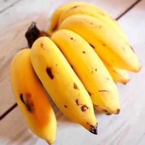 バナナ 苗 【沖縄島バナナ】 ポット苗 バナナの木 熱帯植物 トロピカルフルーツ 常緑 苗木 果樹 果樹苗