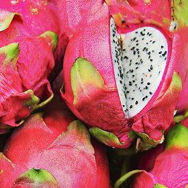 ドラゴンフルーツ 苗 【ドラゴンフルーツ (白肉)】 ポット苗 ピタヤ 熱帯植物 トロピカルフルーツ 常緑 苗木 果樹 果樹苗