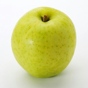 りんご 苗木 【王林 (おうりん)】 2年生 接ぎ木 大苗 林檎 苗 果樹 果樹苗