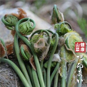 ゼンマイ 苗 【山菜 ぜんまい】 4号ポット苗 苗木 野菜 野菜苗