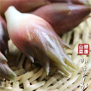 ミョウガ 苗 【山菜 みょうが】 4号ポット苗 茗荷 苗木 野菜 野菜苗