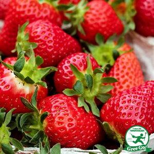 いちご 苗 【とちおとめ】 3号ポット苗 苺 野菜 栽培 家庭菜園 多年草