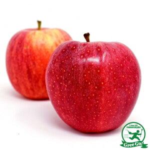 りんご 苗木 【YD(矮性台木) ジョナゴールド】 1年生 接木 ポット苗 林檎 苗 果樹 果樹苗