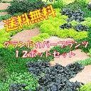 【送料無料】花苗 グランドカバープランツ12ポット おまかせセット グランドカバー お得なセット