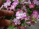 四季咲き ガーデニング