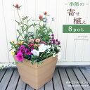 【植え込み済】季節の花の寄せ植え10号角鉢 花苗8ポット+プラスチック鉢 クラフトスクエア 【同梱不可】