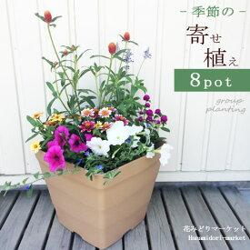 【植え込み済み】寄せ植え セット 季節の花苗8ポット+プラスチック鉢 クラフトスクエア 【同梱不可】