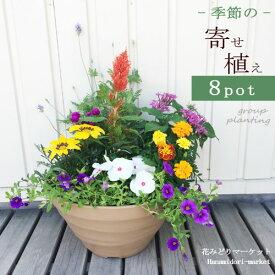 【植え込み済み】寄せ植え セット 季節の花苗8ポット+プラスチック鉢 クラフトボール 【同梱不可】
