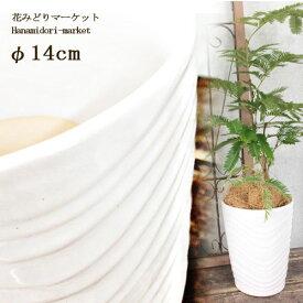 植木鉢 陶器製 ホワイト 直径14cm KV-140 底穴あり