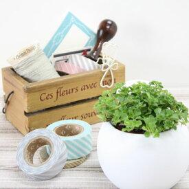 底面給水陶器鉢入り観葉植物 アクアテラポット ラウンド7 インテリアグリーン全8種 シュガーバイン アイビー ペペロミア