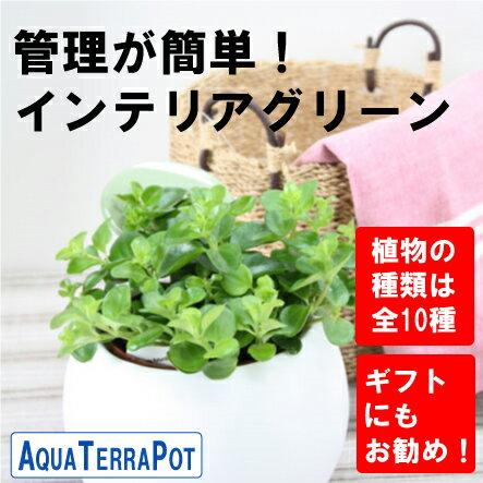 インテリアグリーン アクアテラポット ラウンド10.5タイプ 全10種 ギフト 底面給水 観葉植物 陶器 シュガーバイン アイビー ペペロミア