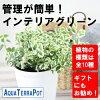 【観葉】アクアテラポットベーシック10.5全10種