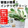 【観葉】アクアテラポットブリキポ10.5(シルバー)全10種