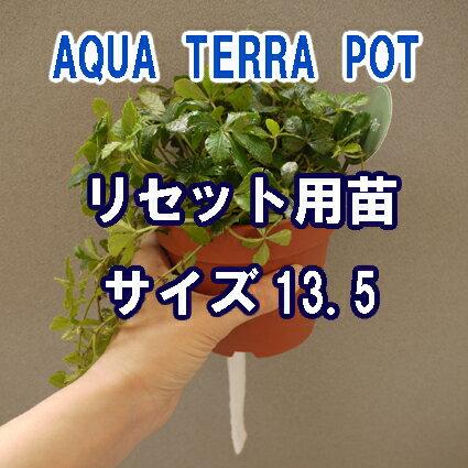 インテリアグリーン アクアテラポット リセット用苗 サイズ13.5 全3種 ギフト 底面給水 観葉植物 シュガーバイン アイビー ペペロミア