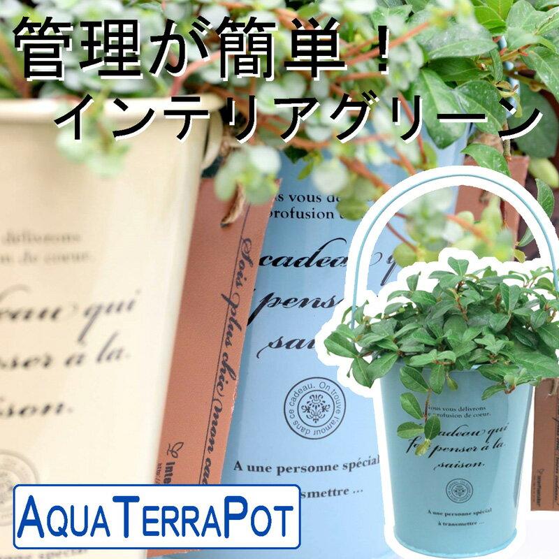 インテリアグリーン アクアテラポット フレンチティン10.5タイプ 全10種 ギフト 底面給水 観葉植物 シュガーバイン アイビー ペペロミア