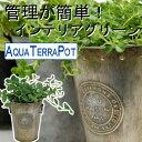 インテリアグリーン アクアテラポット ヴィンテージティン10.5 全10種 ギフト 底面給水 観葉植物 ブリキ シュガーバイン アイビー ペ…