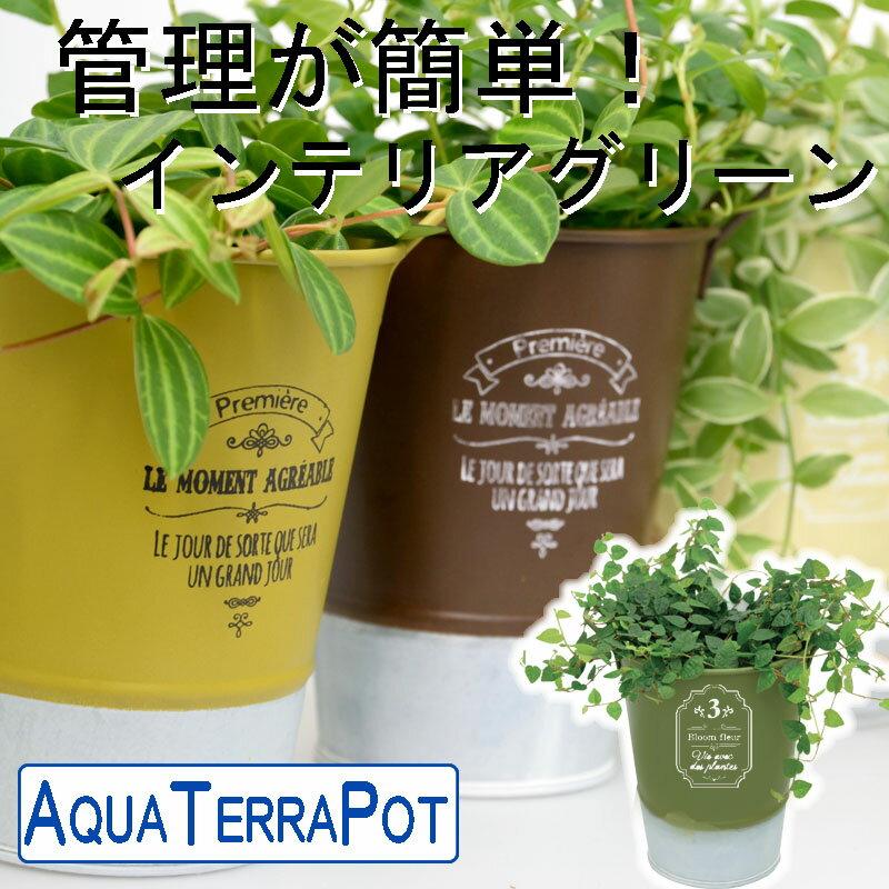 インテリアグリーン アクアテラポット ツートンブリキアースカラーズ10.5 全10種 ギフト 底面給水 観葉植物 シュガーバイン アイビー ヘデラ ペペロミア ワイヤープランツ