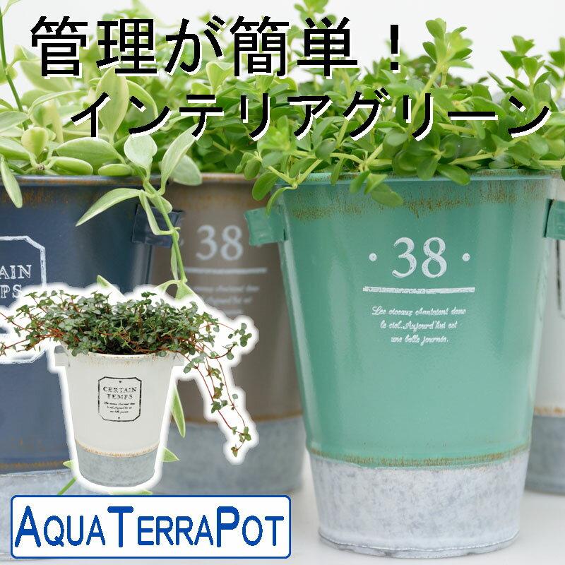 インテリアグリーン アクアテラポット ツートンブリキ10.5タイプ 全10種 ギフト 底面給水 観葉植物 ブリキ シュガーバイン アイビー ペペロミア