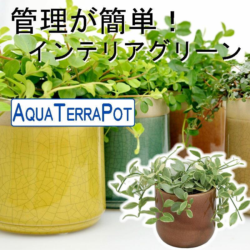 インテリアグリーン アクアテラポット ヴェインボウル10.5タイプ  全10種 ギフト 底面給水 観葉植物 陶器 シュガーバイン アイビー ペペロミア