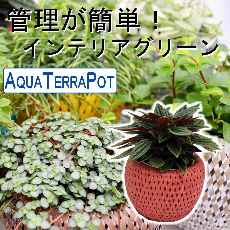 インテリアグリーン アクアテラポット アジアンバスケット カラー10.5タイプ 全10種 ギフト 底面給水 観葉植物 シュガーバイン アイビー ペペロミア