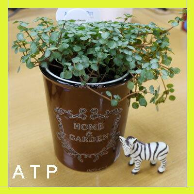インテリアグリーン アクアテラポット ブロカント10.5タイプ 全10種 ギフト 底面給水 観葉植物 シュガーバイン アイビー ペペロミア