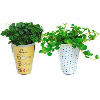 インテリアグリーン アクアテラポット アートチェンジ10.5タイプ 全10種 ギフト 底面給水 観葉植物 シュガーバイン アイビー ペペロミア