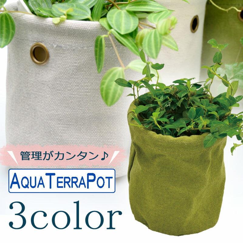 インテリアグリーン アクアテラポット キャンバス10.5 全3色 ギフト 底面給水 観葉植物 シュガーバイン アイビー ヘデラ ペペロミア ワイヤープランツ