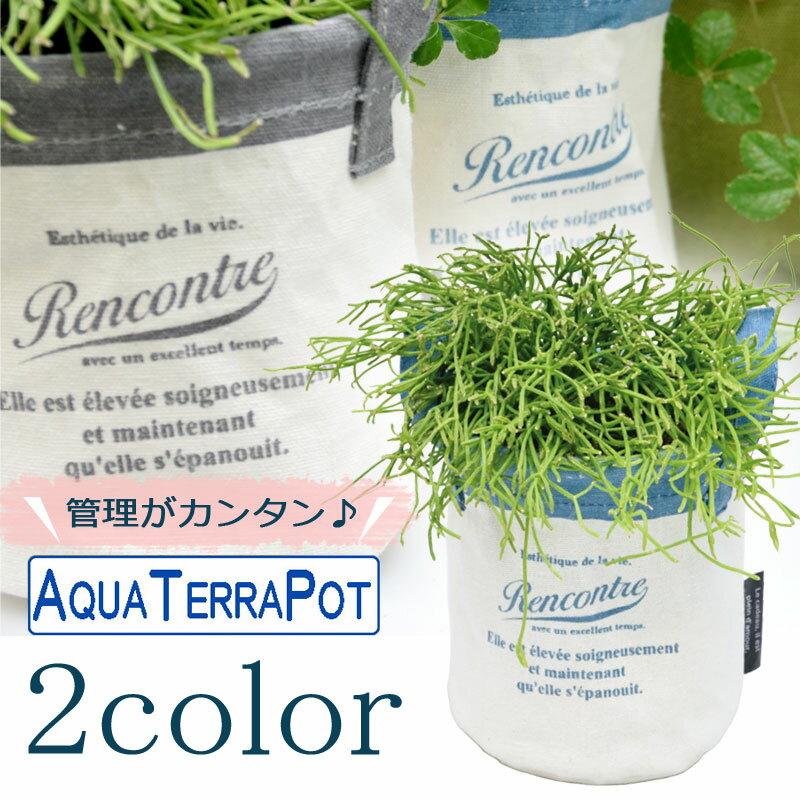 インテリアグリーン アクアテラポット キャンバスバッグ10.5 全2色 ギフト 底面給水 観葉植物 シュガーバイン アイビー ヘデラ ペペロミア ワイヤープランツ