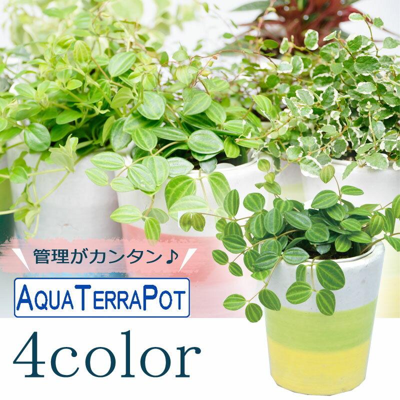 インテリアグリーン アクアテラポット スリーボーダー10.5 全4色 ギフト 底面給水 観葉植物 シュガーバイン アイビー ヘデラ ペペロミア ワイヤープランツ