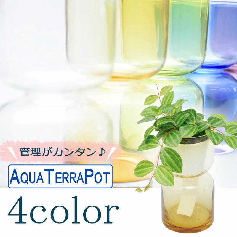 インテリアグリーン アクアテラポット ハイドロカラーグラス7 全4色 ギフト 底面給水 観葉植物 シュガーバイン アイビー ヘデラ ペペロミア ワイヤープランツ