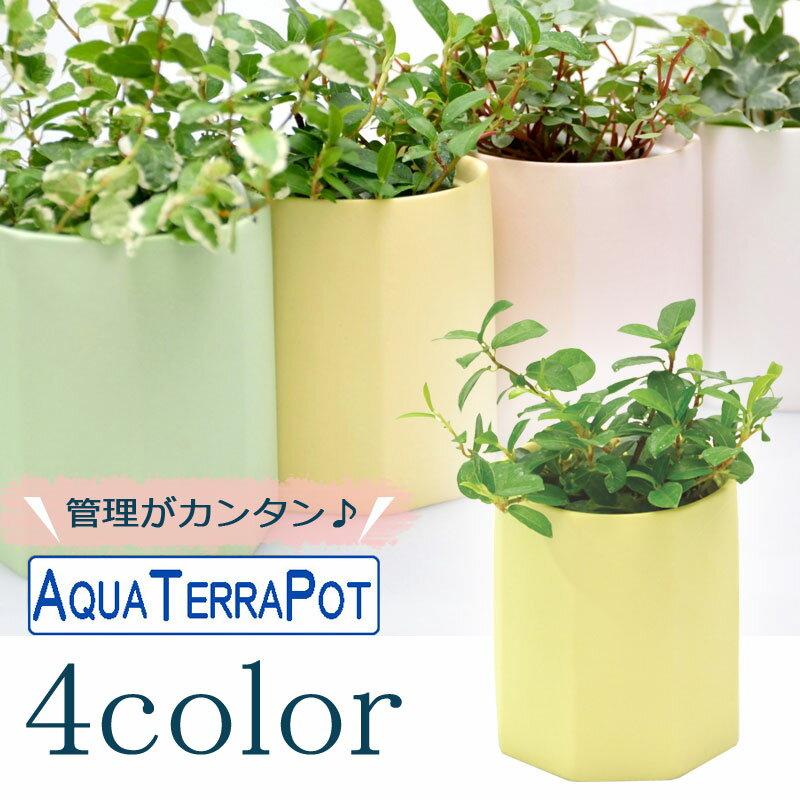 インテリアグリーン アクアテラポット ペールオクタゴン7 全4色 ギフト 底面給水 観葉植物 シュガーバイン アイビー ヘデラ ペペロミア ワイヤープランツ