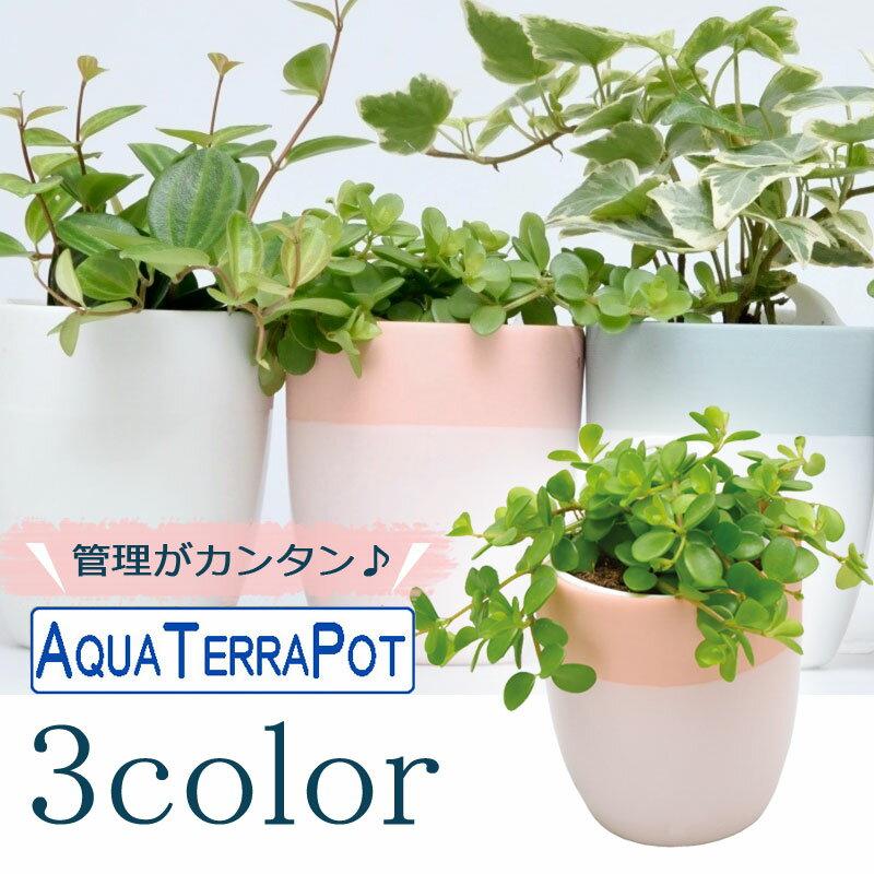 インテリアグリーン アクアテラポット ペールツートン7 全3色 ギフト 底面給水 観葉植物 シュガーバイン アイビー ヘデラ ペペロミア ワイヤープランツ