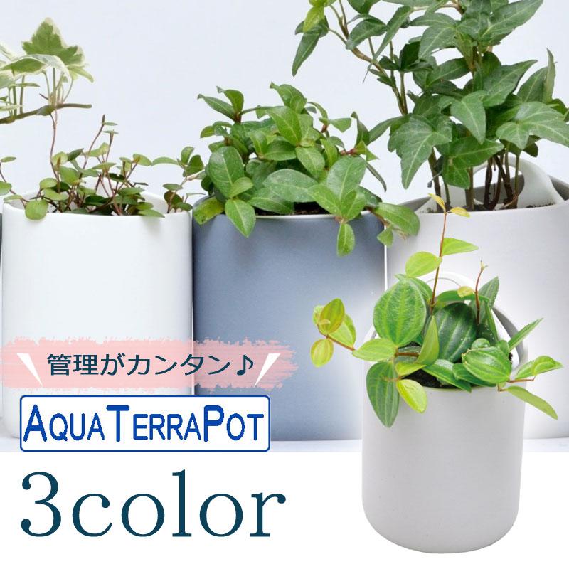 インテリアグリーン アクアテラポット ペールドロップ7 全3色 ギフト 底面給水 観葉植物 シュガーバイン アイビー ヘデラ ペペロミア ワイヤープランツ