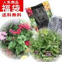 福袋宿根草&季節の花苗&用土&堆肥セット箱いっぱいにお届けします!【同梱不可】