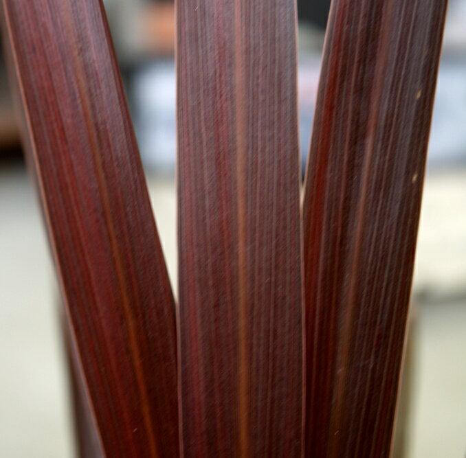 観葉植物 コルジリネ オーストラリス レッドスター 4号ポット コルディリネ