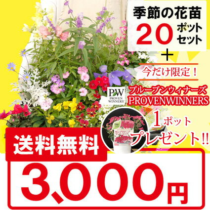 ◆【送料無料】花苗 季節の花苗 花色ミックス20ポットセット+1ポット(PW)プレゼント!選べる花色 ギフト 母の日 花 プレゼント 贈り物 寄せ植え ガーデニング