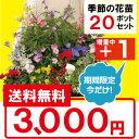 【送料無料】花の苗物 季節の花苗 花色ミックス20ポット+(今だけ1ポット増量中!!)セット選べる花色 ギフト 寄せ植え ガーデニング 花…